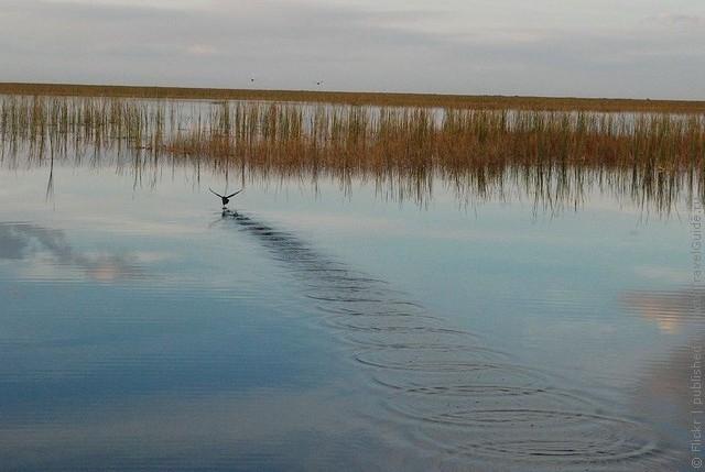 nacionalnyj-park-everglejds-13