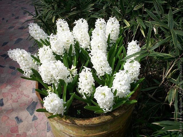 botanicheskiy-sad-andre-hellera-19
