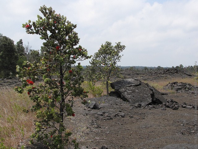 gavayskie-vulkany-09