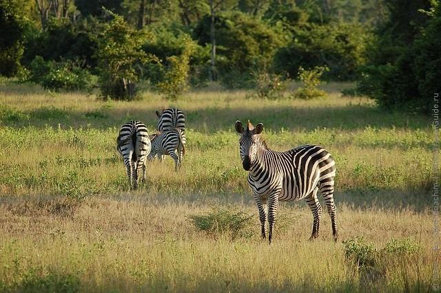 top10-safari-natsionalnyiy-park-yuzhnaya-luangva-1