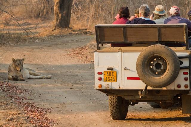 top10-safari-natsionalnyiy-park-yuzhnaya-luangva-2