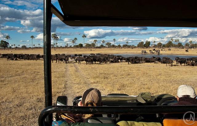 top10-safari-natsionalnyy-park-hvange-1