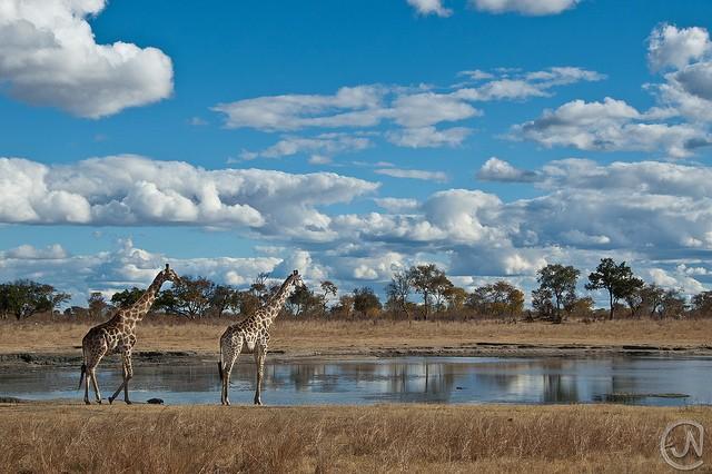 top10-safari-natsionalnyy-park-hvange-2