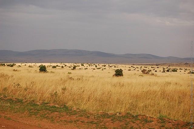 Кенийский заповедник масаи мара