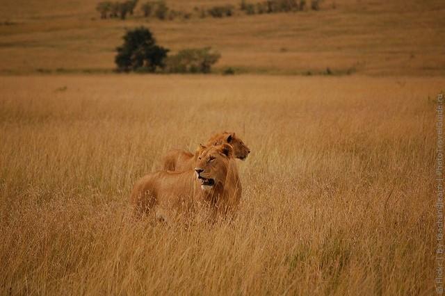 zapovednik-masai-mara-04