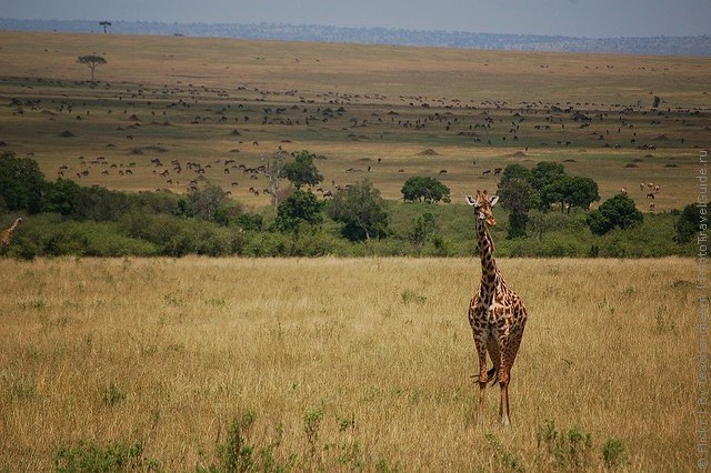 zapovednik-masai-mara-05