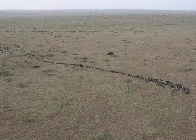 zapovednik-masai-mara-10