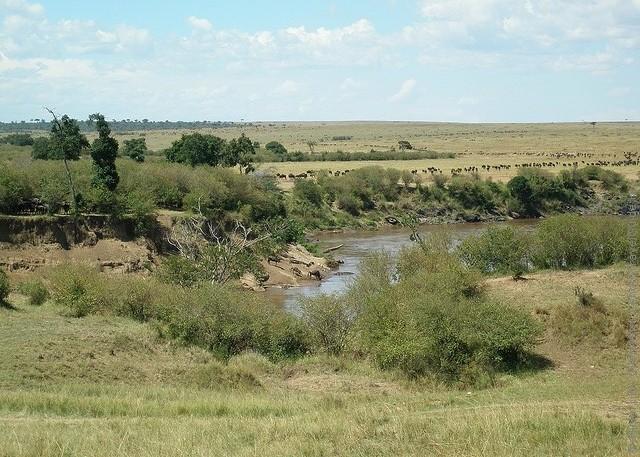 zapovednik-masai-mara-15