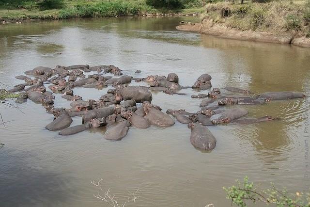 zapovednik-masai-mara-16
