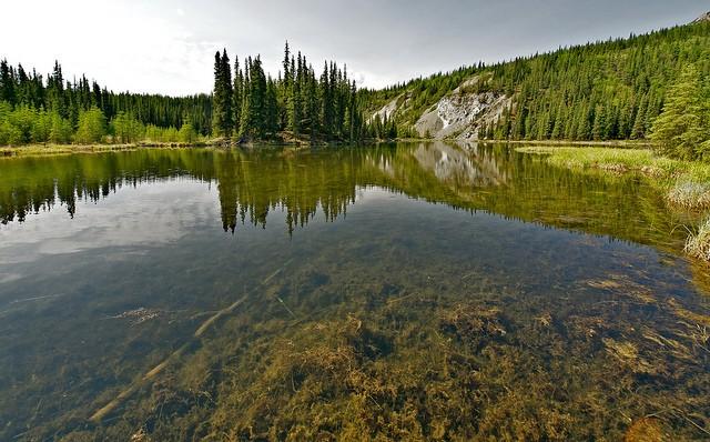 nacionalnyy-park-denali-11