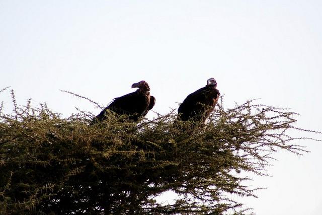 natsionalnyi-park-serengeti-09