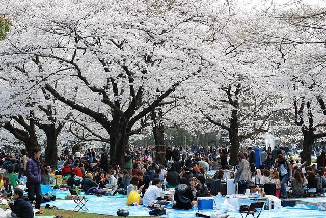 yoyogi-park-12