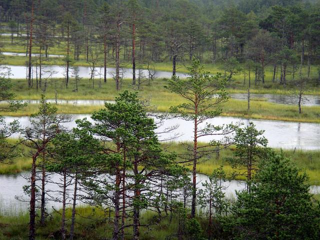 natsionalnyi-park-lahemaa-07