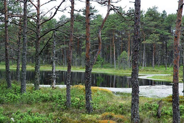 natsionalnyi-park-lahemaa-14