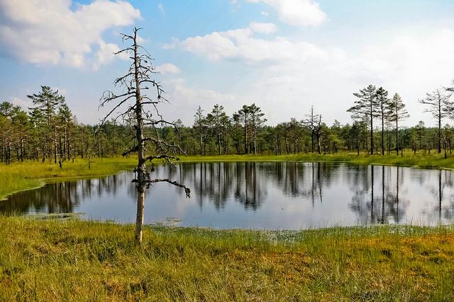 natsionalnyi-park-lahemaa-16