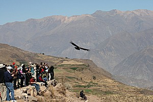 Каньон Колка в Перу