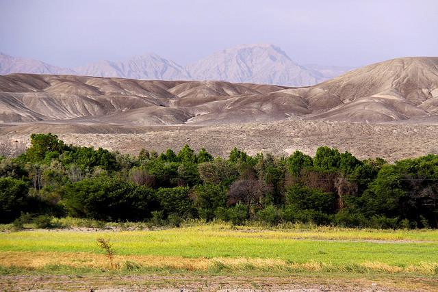pustynja-naska-19