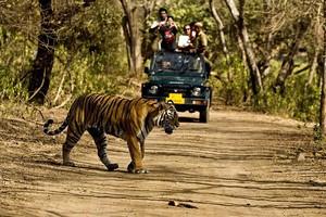 Сафари в Индии