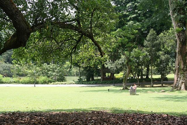 singapurskij-botanicheskij-sad-17