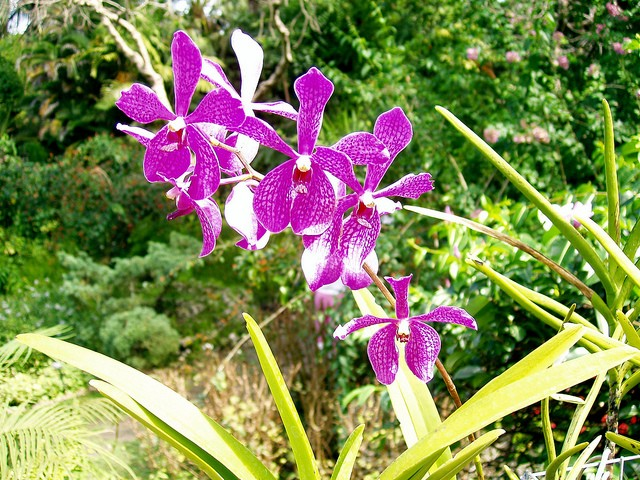 botanicheskiy-sad-andromeda-17