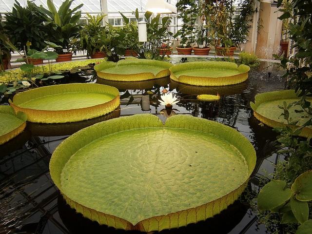 botanicheskiy-sad-helsinki-08