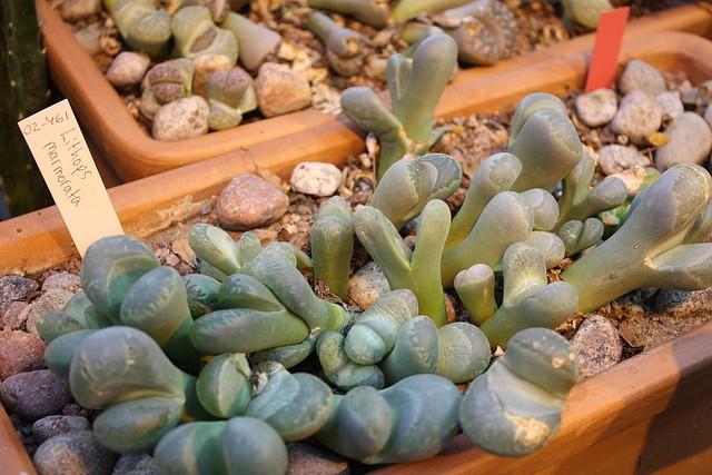 botanicheskiy-sad-helsinki-09