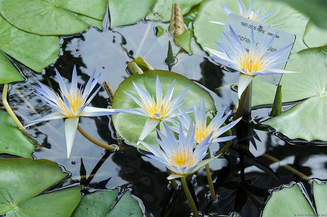 botanicheskiy-sad-helsinki-10