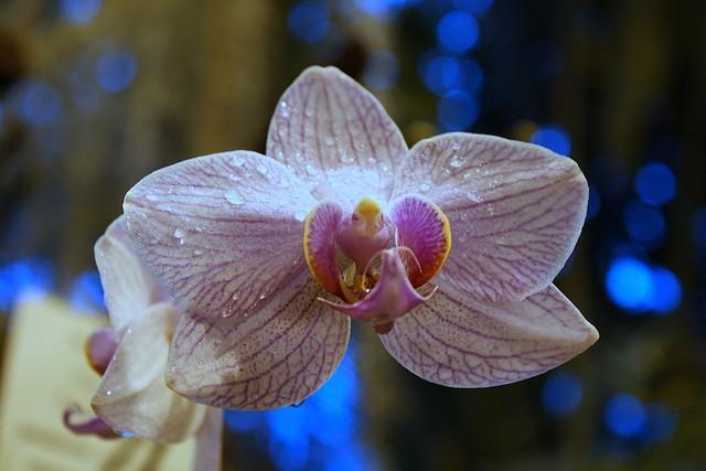 botanicheskiy-sad-helsinki-12