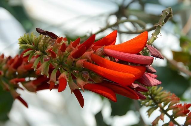 botanicheskiy-sad-helsinki-14