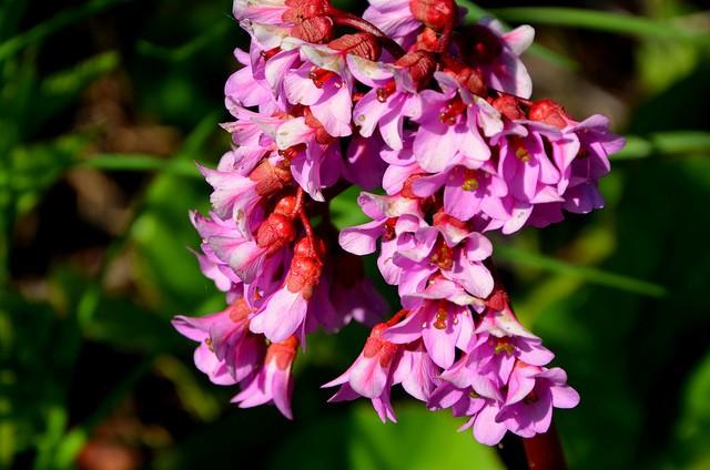 botanicheskiy-sad-helsinki-15