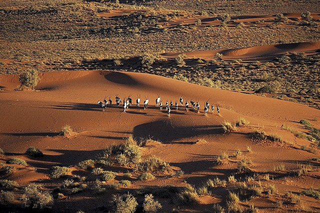 an analysis of the kung tribe in the kalahari desert The kung: bushmen of the kalahari deep in the kalahari desert lives a group whose people have been there for tens of thousands of years this group.