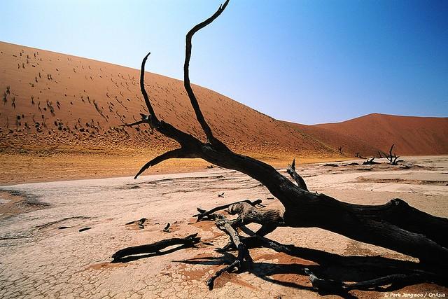 pustynya-namib-04