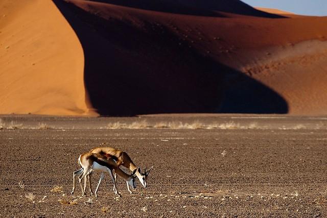pustynya-namib-15