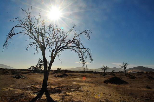 pustynya-namib-16