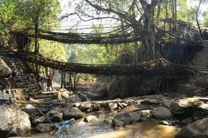 Живые Мосты Черапунджи, Индия.