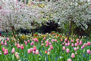 Сад Клода Моне