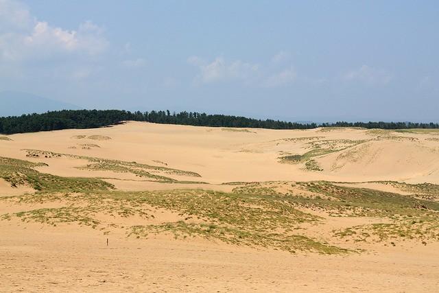 песчаные дюны тоттори деревья