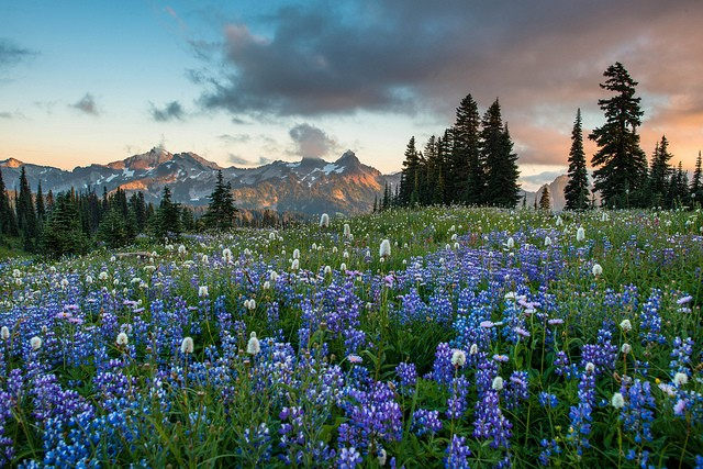 mount-rainier-national-park-05