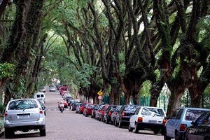 Улица Руа Гонсалу де Карвальо, Бразилия
